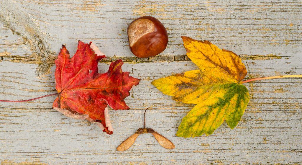 autumn leaves minimalism
