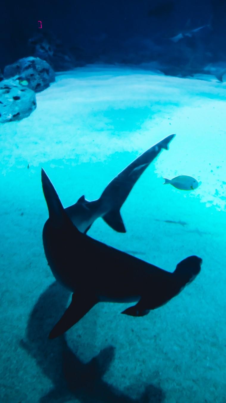 aquarium copenhagen shark