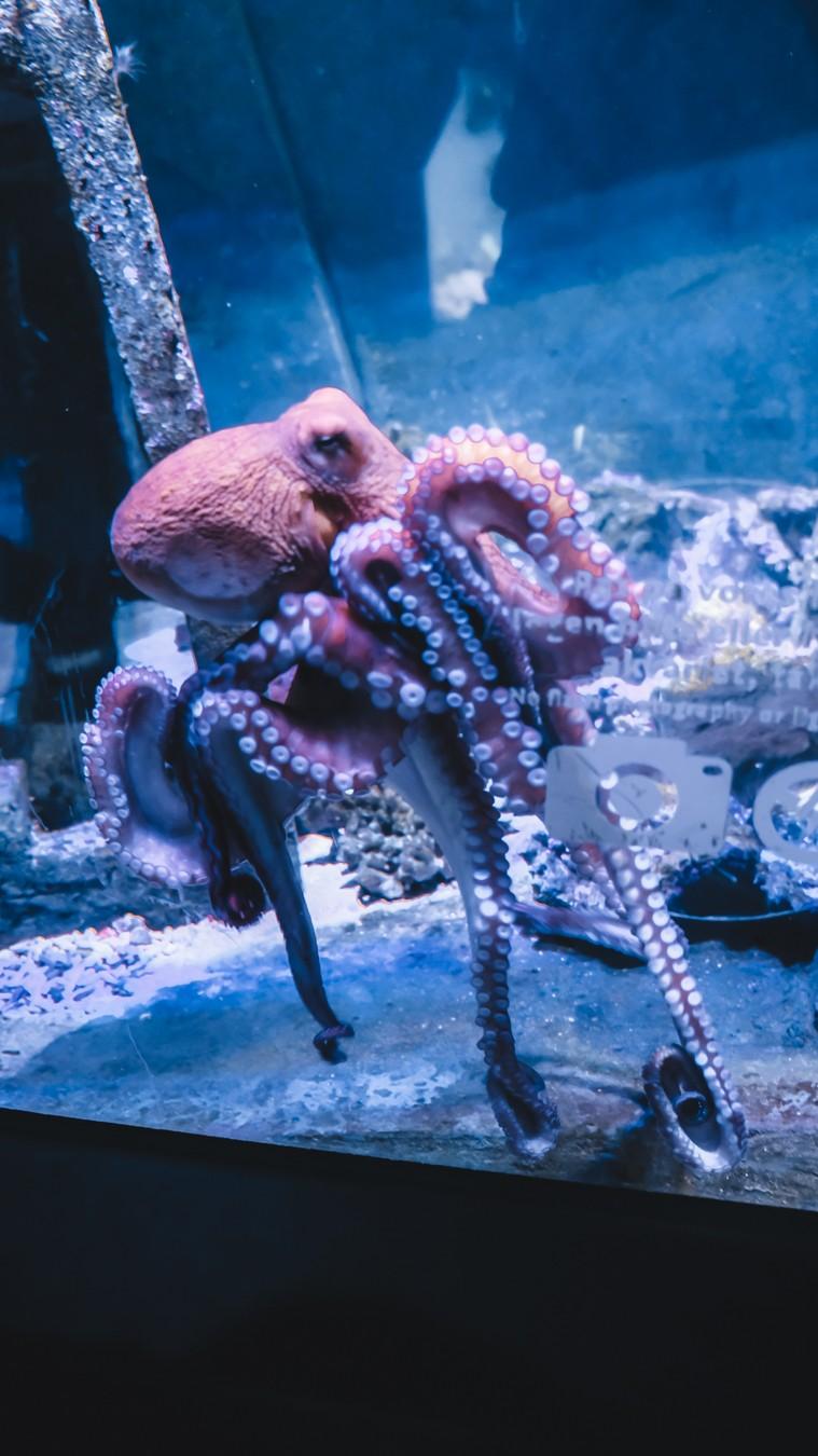 aquarium copenhagen octopus