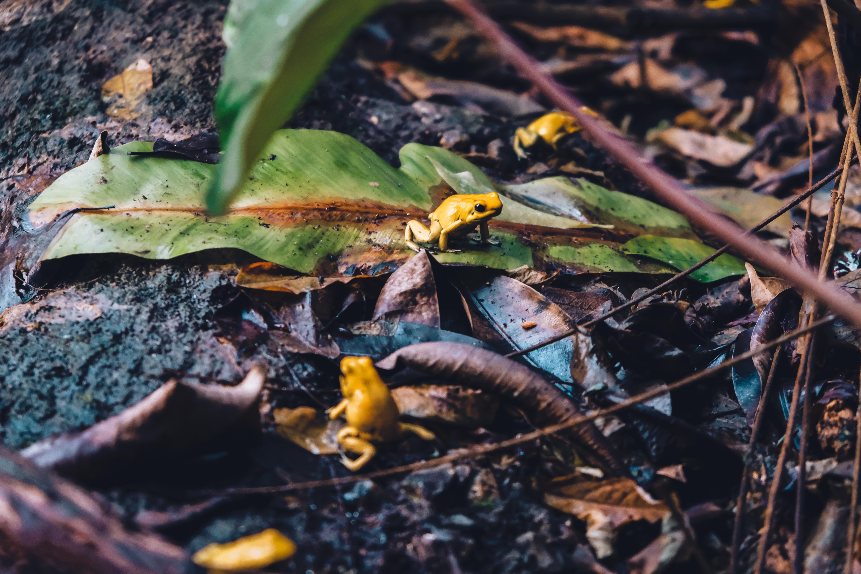 aquarium copenhagen frogs