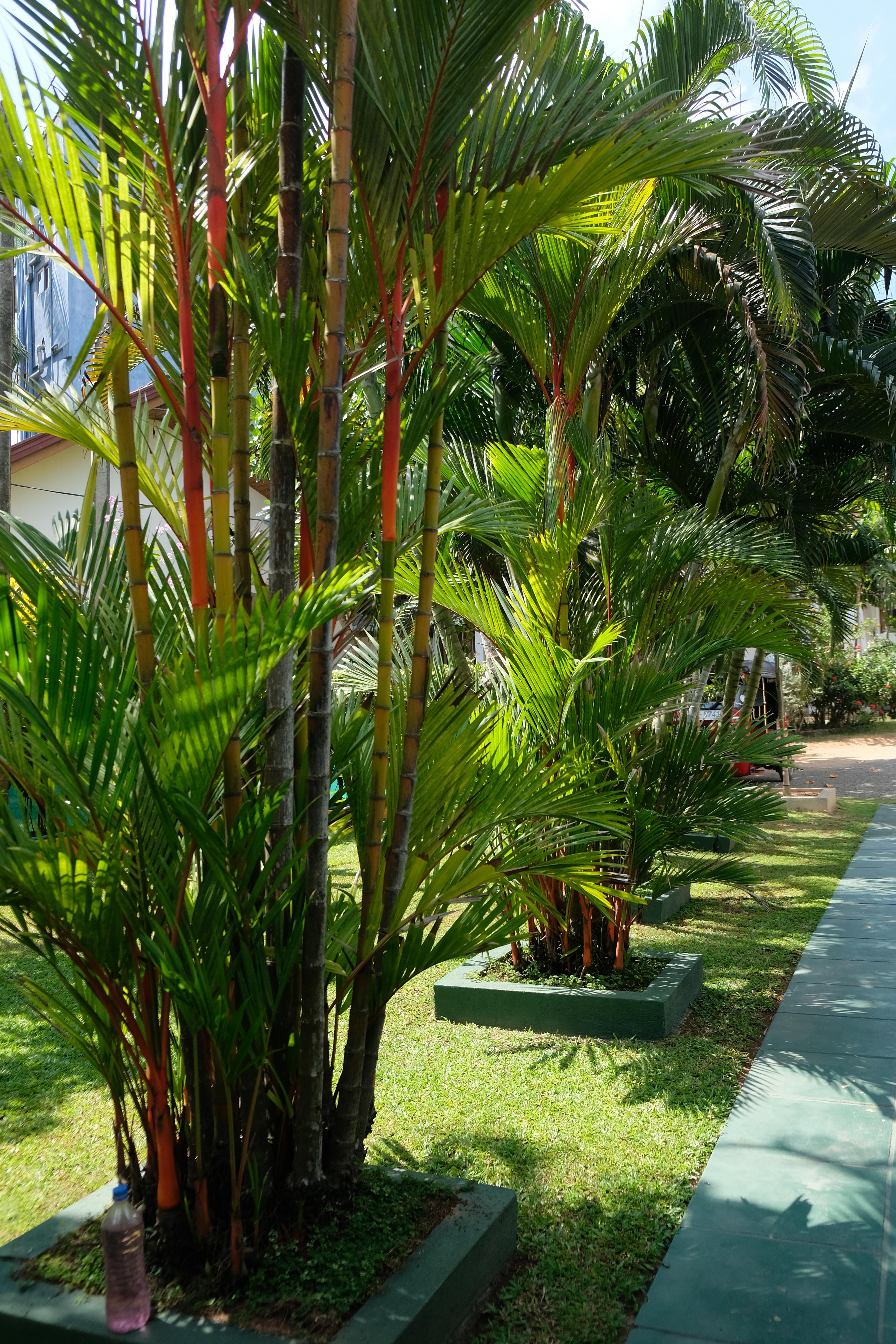 hikkaduwa hotel sri lanka garden