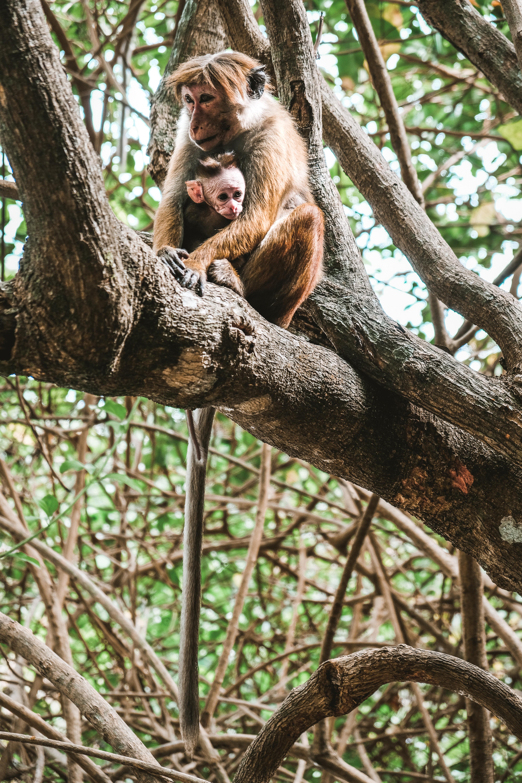 monkeys in sri lanka