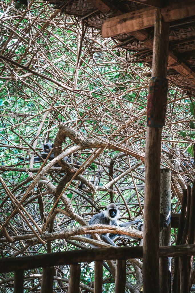 breakfast with monkeys sri lanka