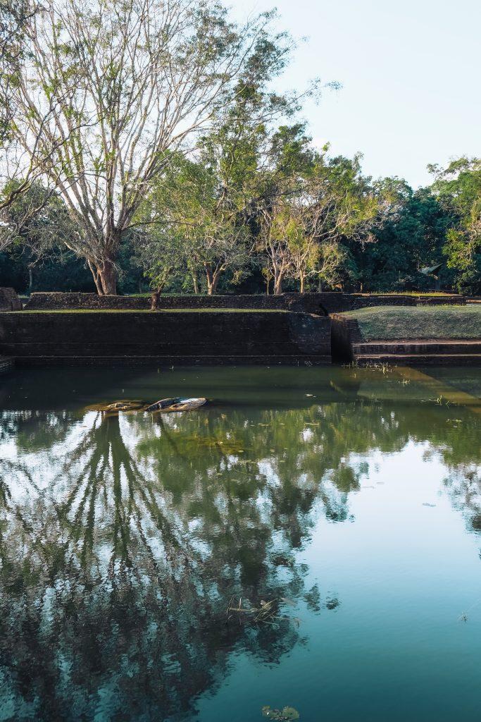 beautiful lake with a crocodile in sigiriya sri lanka