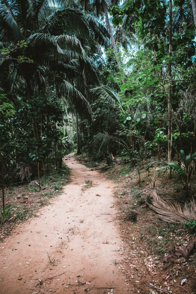 tiny narrow road in sri lanka