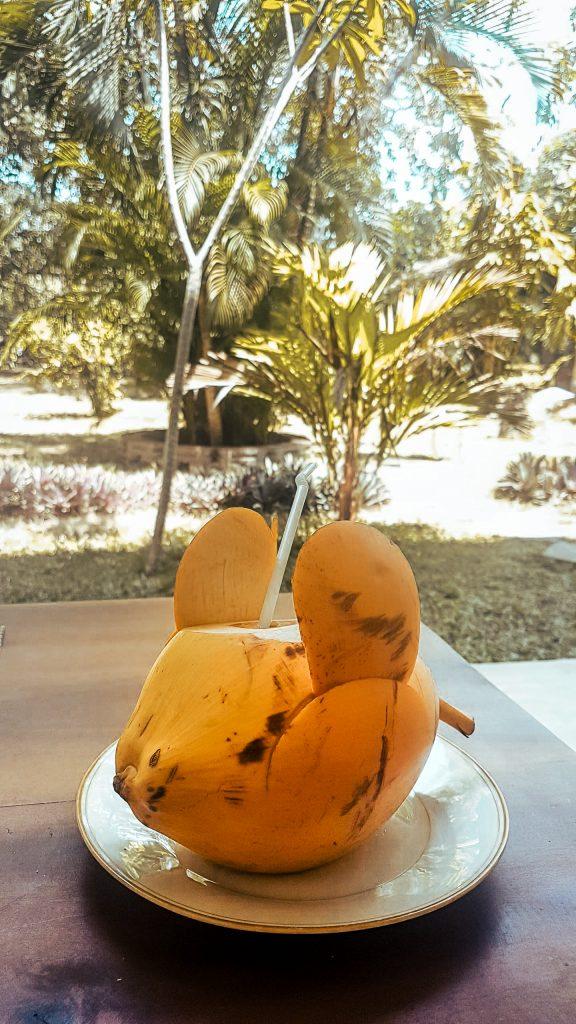 coconut water welcome drink in Sri Lanka homestay