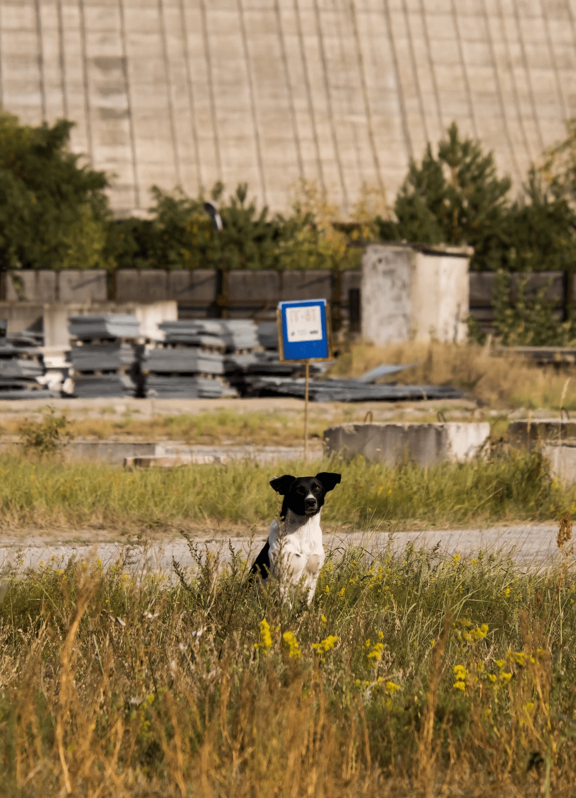 lonely dog in chornobyl