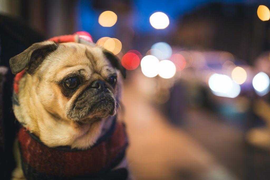 sad puppy failure story
