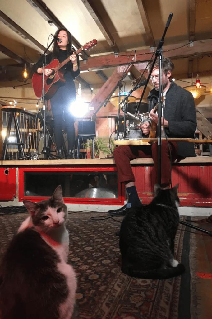 netherlands concert online cultural activity