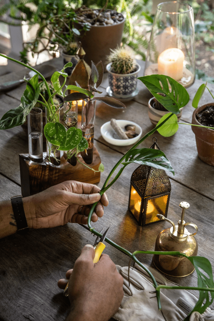 plants propagating process online