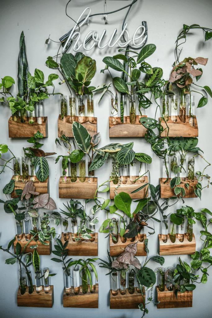 plants propagation workshop online