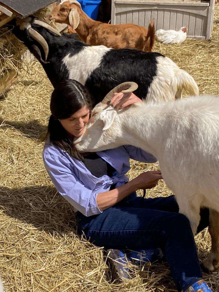 rescue goats cultural activity