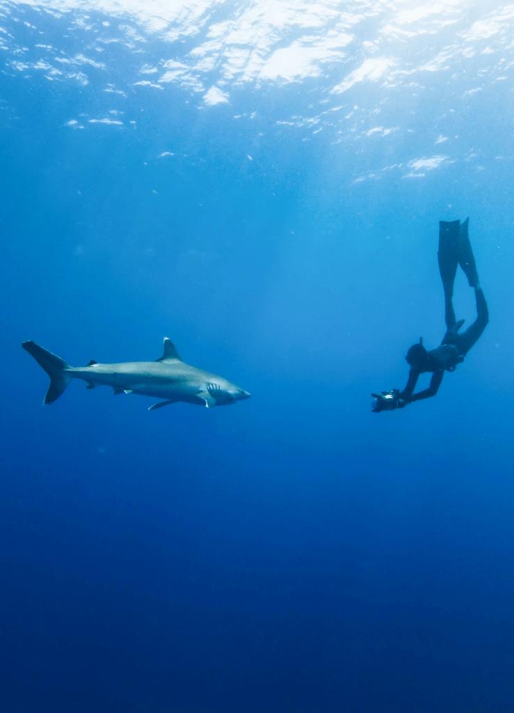 shark scientist best cultural activities