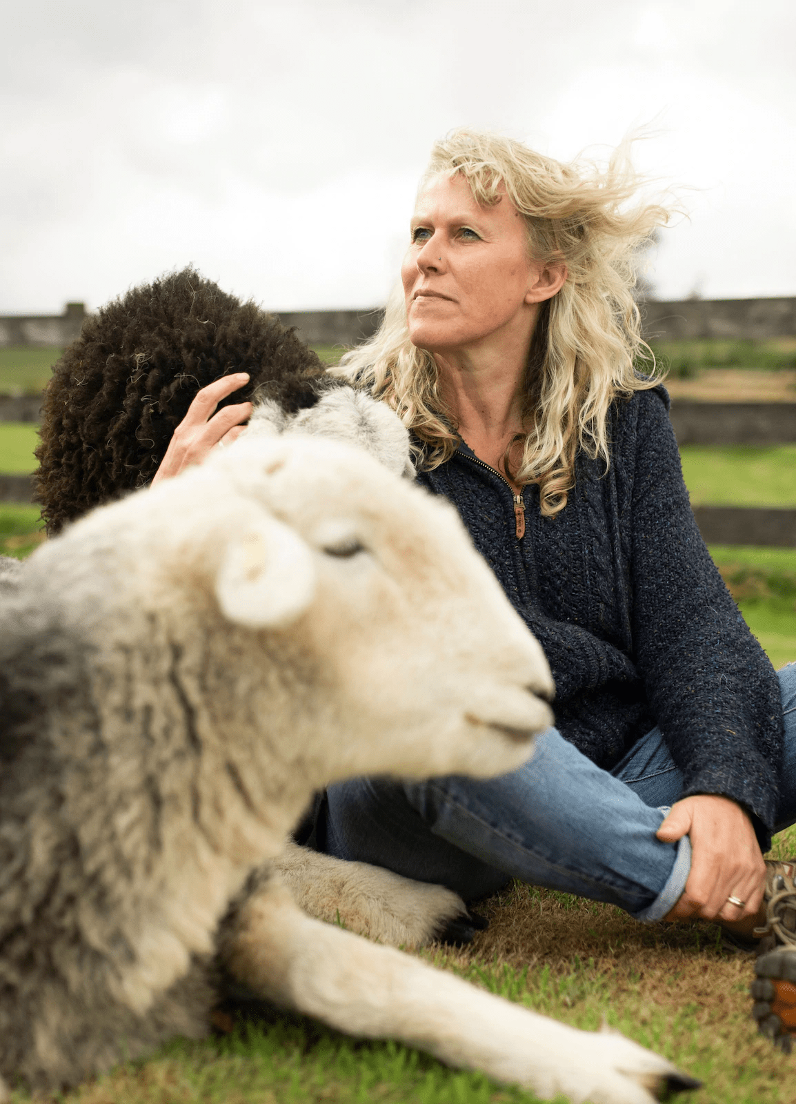 online travel from home sheep meditation