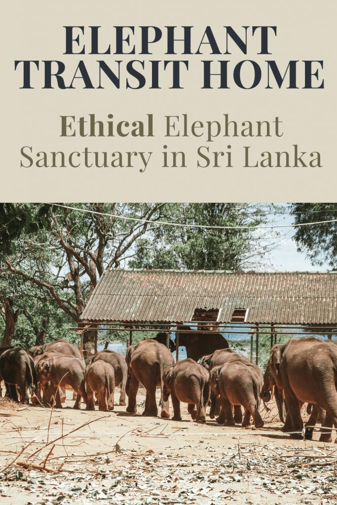 ethical elephant transit home sri lanka