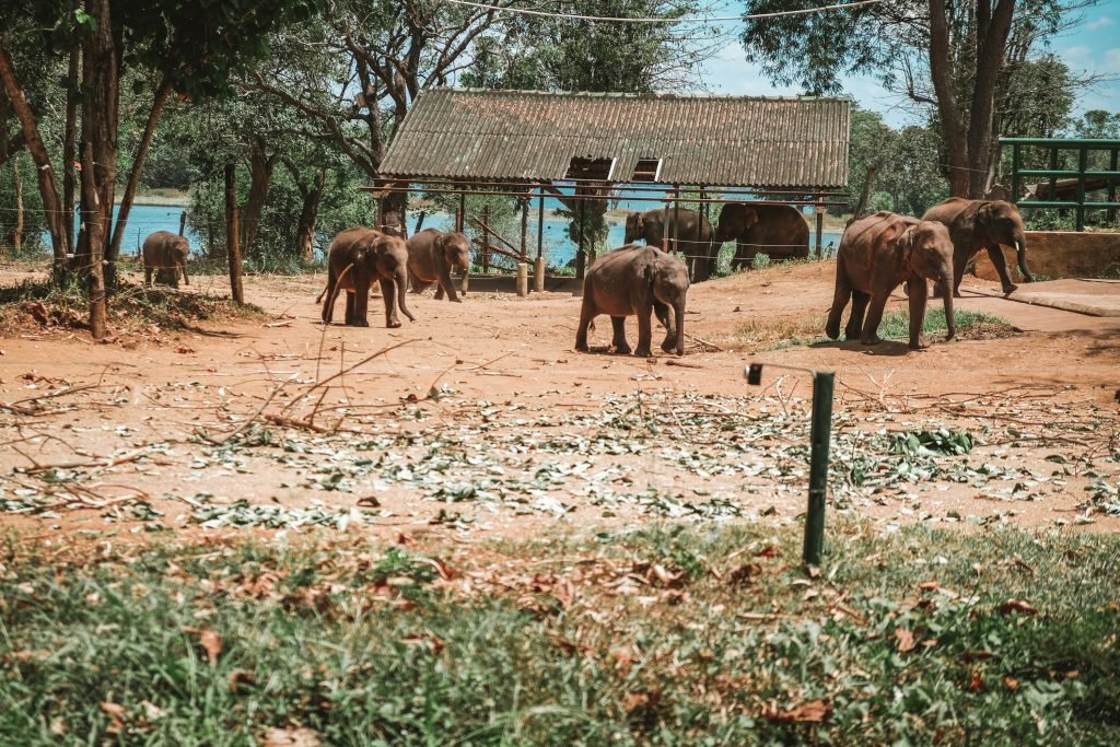 baby elephants in a sanctuary sri lanka