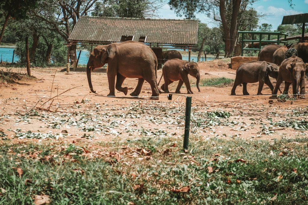 feeding time elephant transit home