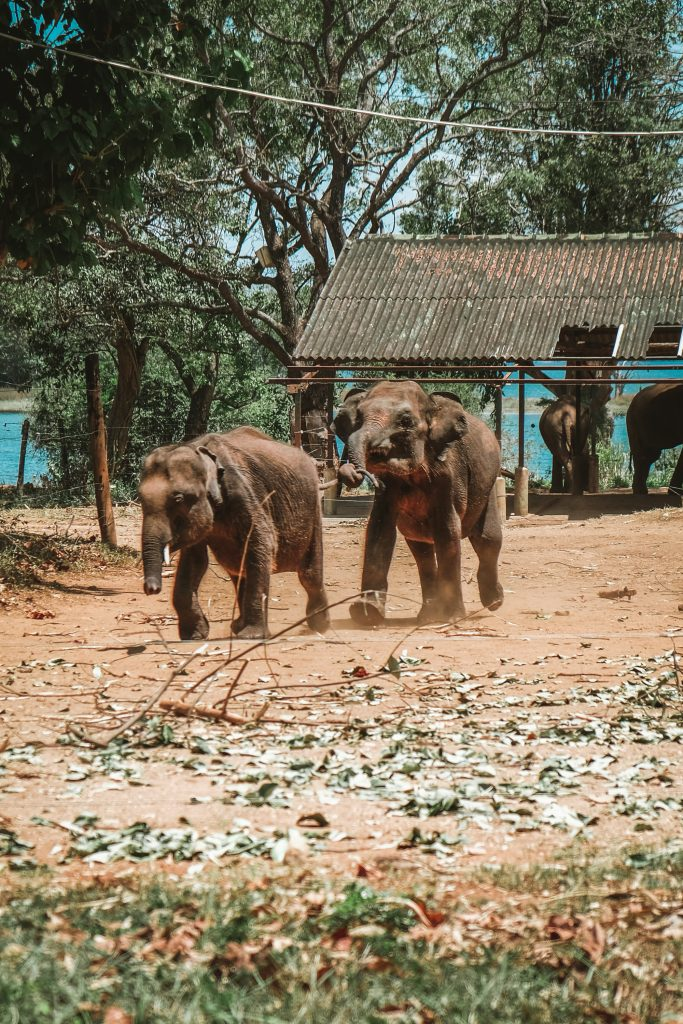 elephants playing in elephant transit home