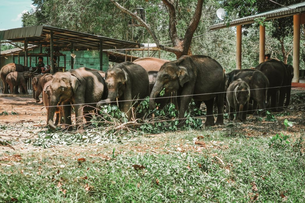 feeding time in elephant transit home