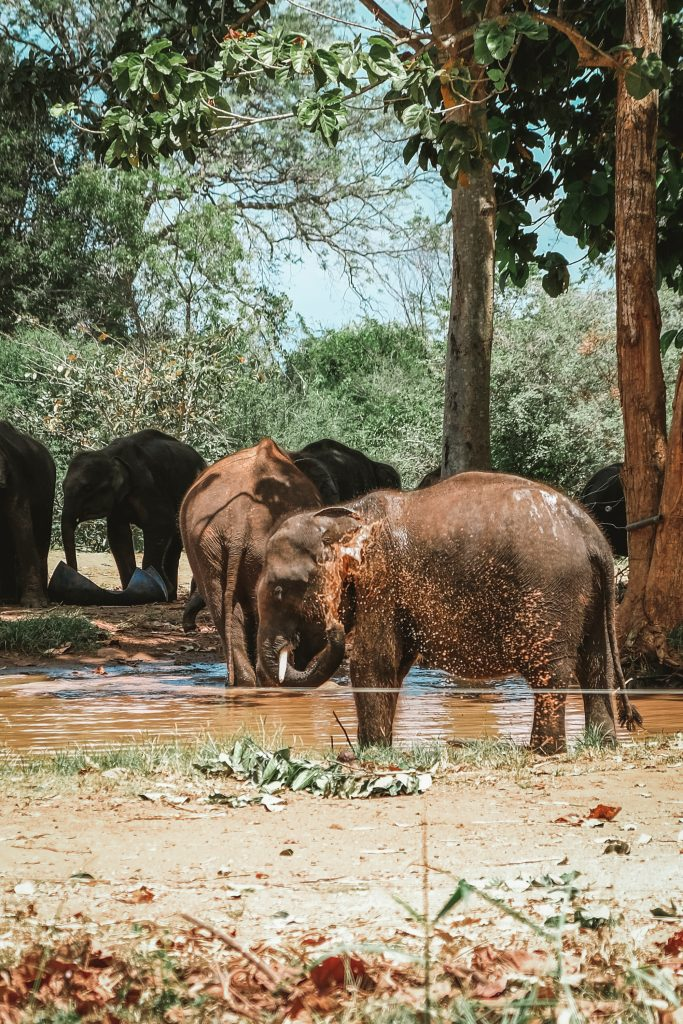 elephant bathing in ethical sanctuary