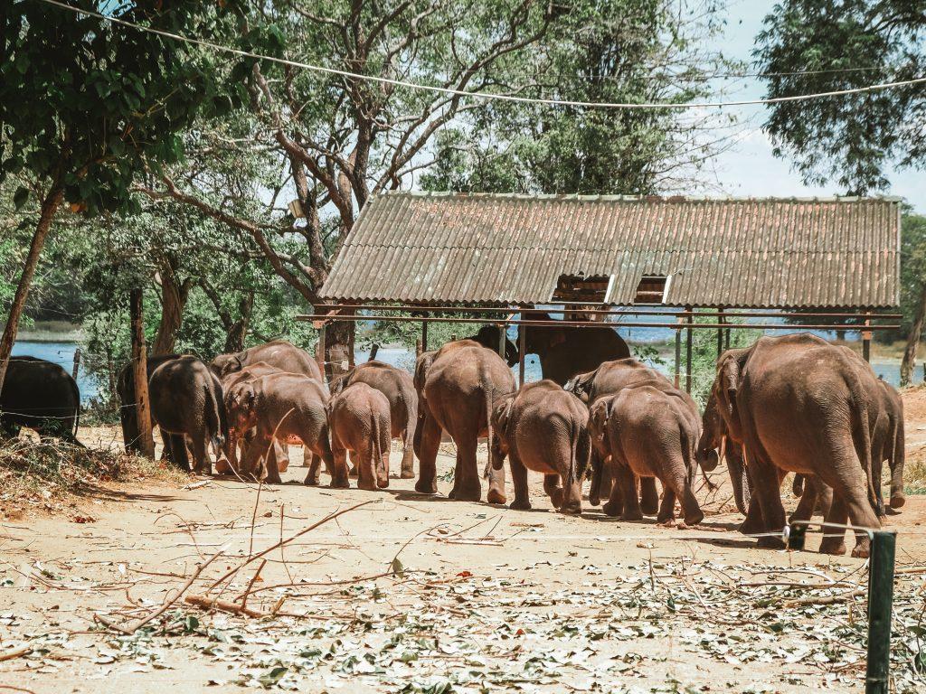 elephants leaving feeding place