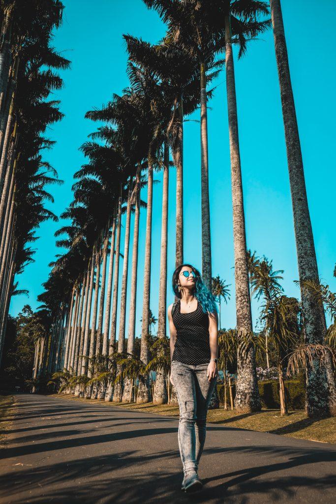 kandy botanical garden palm avenue