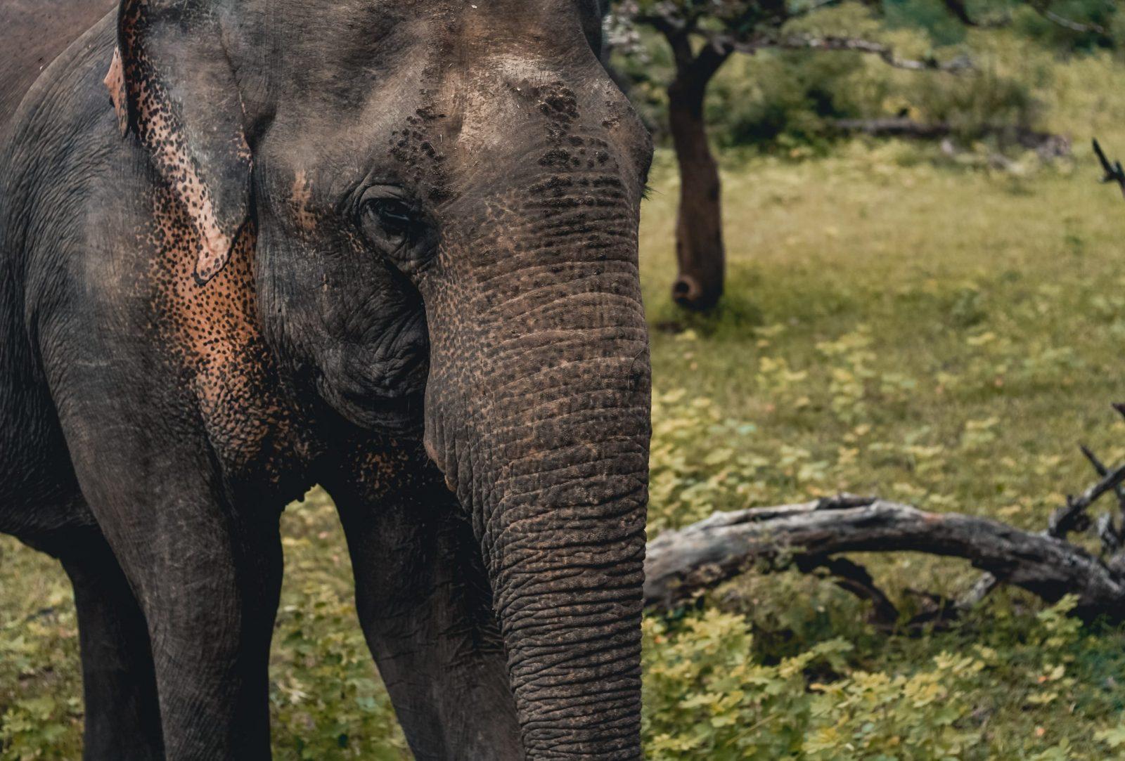 most ethical elephant sanctuary - elephant transit home in sri lanka