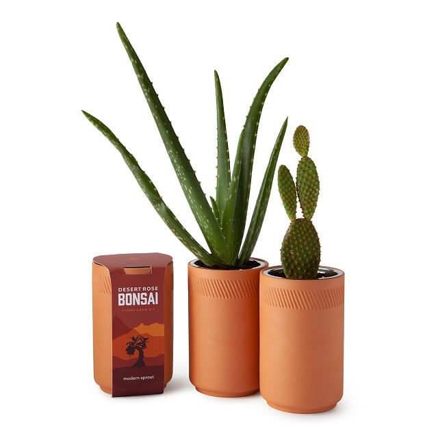 desert growth kit for office desk